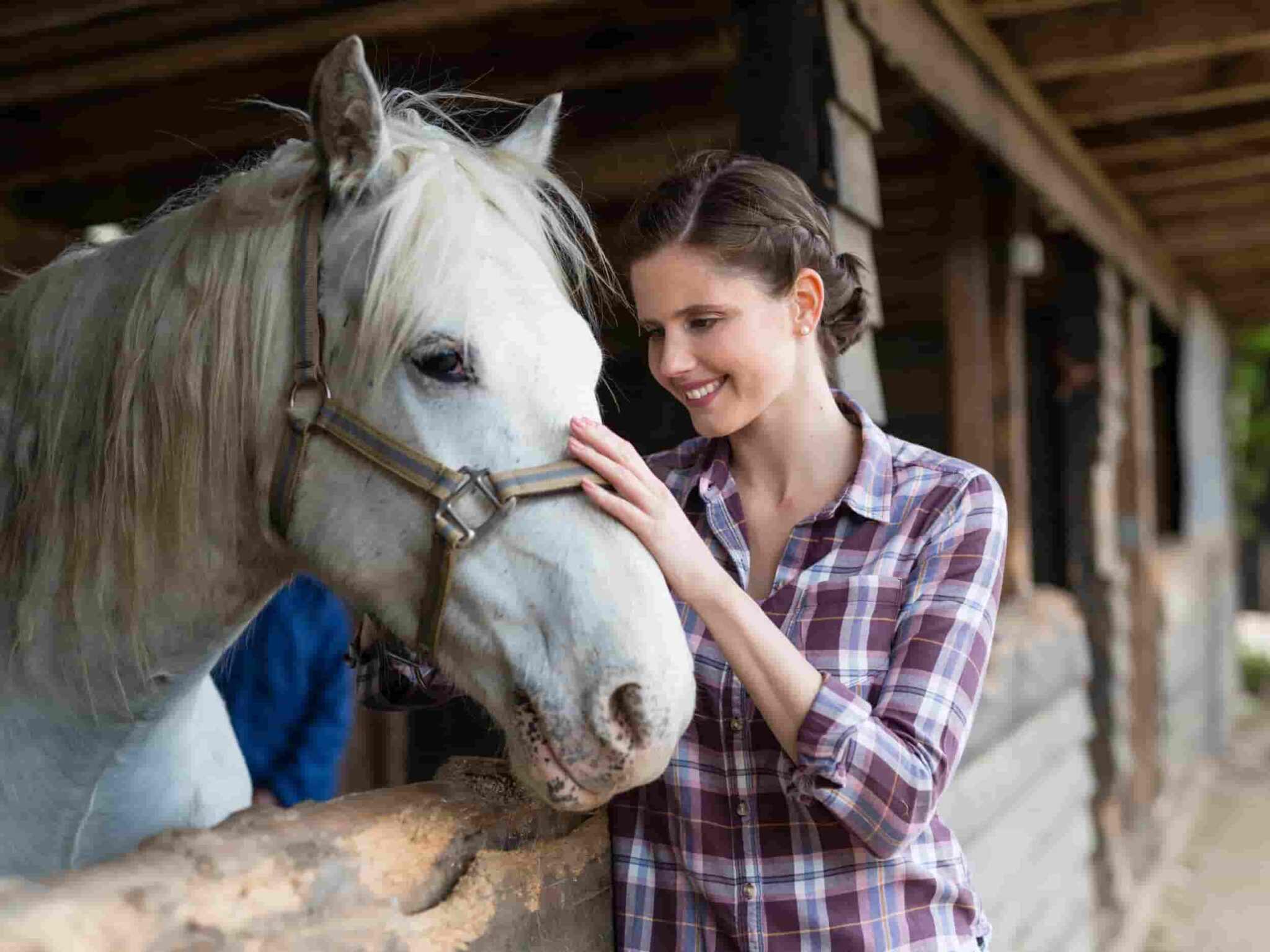Horses Can Communicate With Humans, Say Scientists
