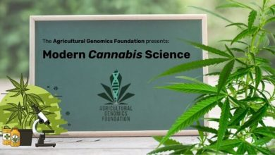 Photo of The University of Colorado at Boulder to Include a Course Based on Cannabis